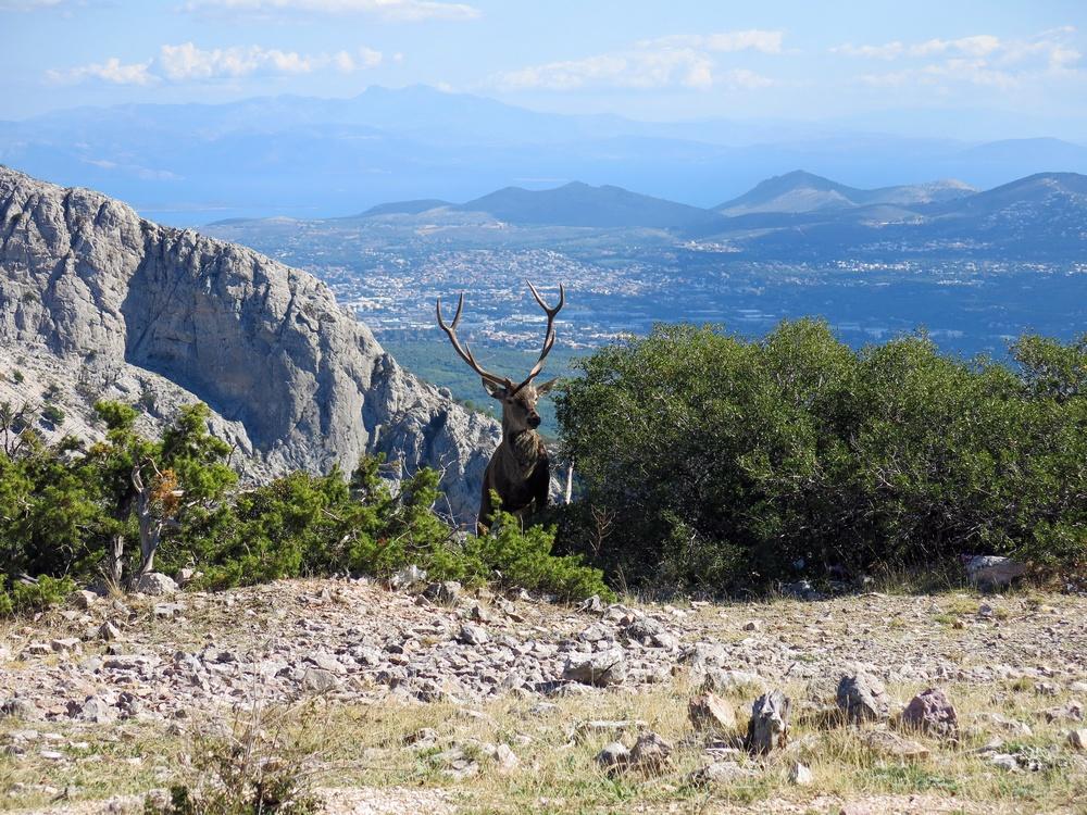 Гора Парнита